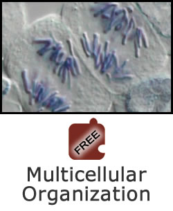 Cell Division and Differentiation: Multicellular Organization