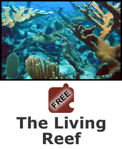 Coral Reef Ecosystems: The Living Reef