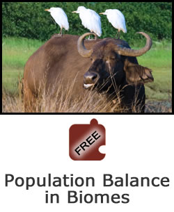 Interdependence of Life: Population Balance in Biomes