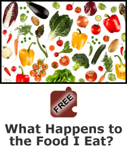 Nutrition: What Happens to the Food I Eat?