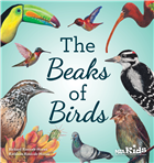 The Beaks of Birds