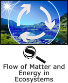 Flow of Matter and Energy in Ecosystems SciGuide