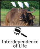 Interdependence of Life SciGuide