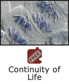 Cell Division and Differentiation: Continuity of Life Science Object