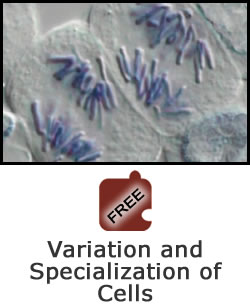 Cell Division and Differentiation: Variation and Specialization of Cells Science Object