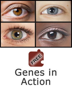 Heredity and Variation: Genes in Action Science Object