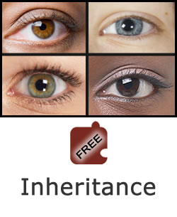 Heredity and Variation: Inheritance Science Object