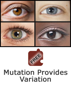 Heredity and Variation: Mutation Provides Variation Science Object