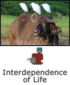 Interdependence of Life SciPack