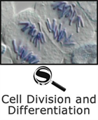 Cell Division and Differentiation SciGuide