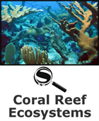 Coral Reef Ecosystems SciGuide