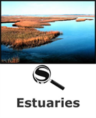 Estuaries SciGuide