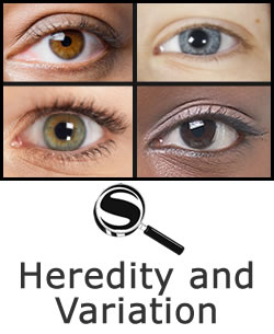 Heredity and Variation SciGuide
