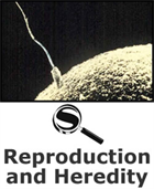 Reproduction and Heredity SciGuide