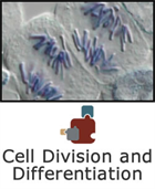 Cell Division and Differentiation SciPack