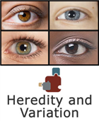 Heredity and Variation SciPack